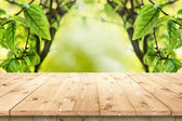 Empty wooden table in a sun drenched summer garden for product placement — Stock Photo