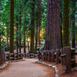 Stock Photo: Redwood Trail in SequoiPark