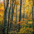 Herbstlaub in den Blue Ridge mountains — Stockfoto