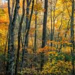 podzimní listí v blue ridge mountains — Stock fotografie