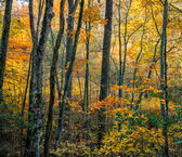 Autumn Foliage in the Blue Ridge Mountains — Stock Photo