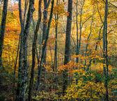 Fall Trees in Virginia — Stock Photo
