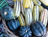 Colorful Squash at Farmers' Market — Stock Photo
