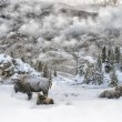 Bison and Steam in Yellowstone Winter — Stock Photo