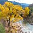Cottonwood Tree by the River — Stock Photo #33150905