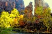 Sunlight on Zion's Autumn — Stock Photo