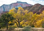 Albero di pioppo in autunno in sion — Foto Stock