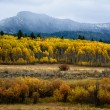 Aspens and Mountains — Stock Photo