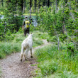 Hiking with Mountain Goat — Stock Photo