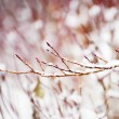 Snow on dead tree — Stock Photo