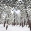 Trees covered with snow in mountains — Stock Photo #30167649