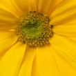 Close up on yellow flower — Stock Photo