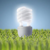 Light bulb on green grass — Stok fotoğraf