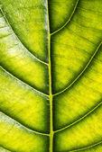 Close-up na textura de folha — Foto Stock