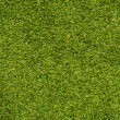 Fresh Green Grass texture — Stock Photo