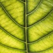 Close up on leaf texture — Stock Photo