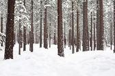 Tree with snow — Stock Photo