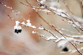 Snow on dead tree — Stock Photo