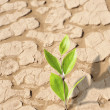 Plant growing in dried cracked desert sand — Stock Photo