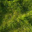 Fresh Grass texture — Stock Photo