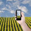 Cell phone in hand take photo of beautiful green grass view — Stockfoto