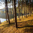 Trees at lake — Stockfoto