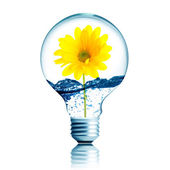 Yellow flower growing inside the light bulb — Stock Photo