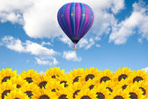 Sunflower field with hot air balloon — Stock Photo