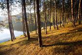 Trees at lake — Stock Photo