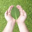 Green leaf on human hands  — Stok fotoğraf