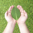 Green leaf on human hands — Foto de Stock