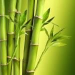 Fresh Bamboo — Stock Photo #31431025