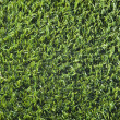 Grass Texture — Stock Photo #31432155