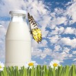 Bottle of milk on green grass — Stock Photo