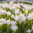 Flower field with butterfly — Stock Photo