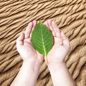 Hands holding on the green leaf — Stock Photo