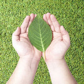 Green leaf on human hands — Stock Photo
