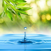 Water drop from bamboo leaf — Stock Photo