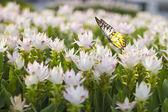 蝶と花のフィールド — ストック写真