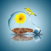 žárovka s květin a ptáků uvnitř — Stock fotografie