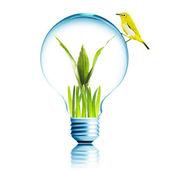 Yellow bird on light bulb — Stock Photo