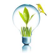 Yellow bird on Light Bulb with green grass — Stock Photo