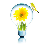 Yellow bird on light bulb — Stock Photo