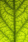 Leaf Close Up texture — Stock Photo