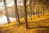 Tree near water lake — Stock Photo
