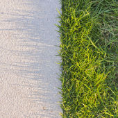 Grass with shadows — Stock Photo