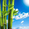Bamboo on sky — Stock Photo