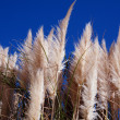 Tall grass on a background of  blue sky — Stock Photo