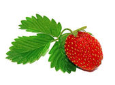 Strawberry with leaf isolated — Stock Photo