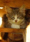 Little kitten sitting on the boards — Stock Photo